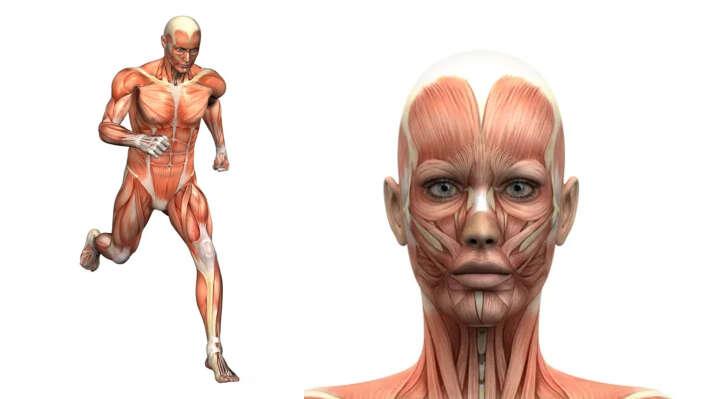 Тест: проверьте свои знания устройства тела человека
