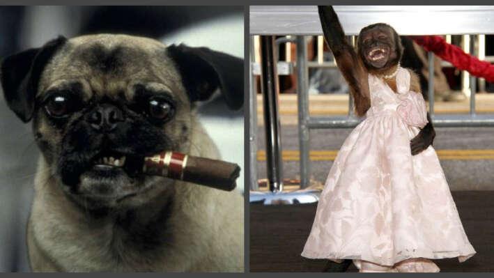 Тест: угадайте, в каких фильмах снимались эти животные