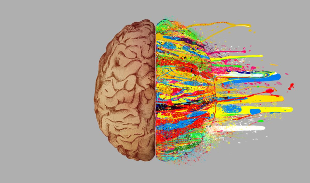 Мозг два полушария картинки